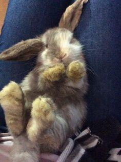 Bunny flop! ❤️