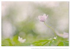 Springtime. Door communitylid LoulouBeavers - NG FotoCommunity ©