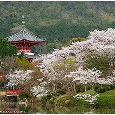 closer view to pagoda by Daikaku-ji temple, north of Arashiyama and west of Kyoto