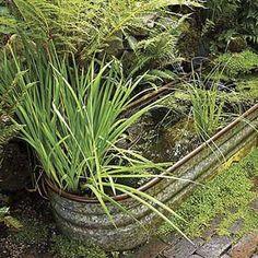 Make a watery garden
