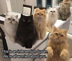 5 Funny Animal Pictures Of Today - #funnymemes #funnypictures #funnyanimals #funny #lol #haha #memes #funnytexts #funnyquotes