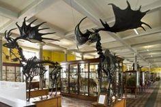 Natural History Museum, Ireland