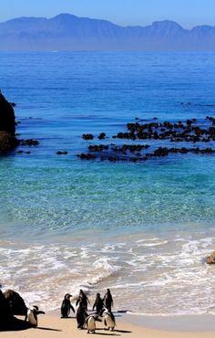 Rocks Beach, Cape Town