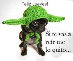 To cute lol Crochet Hippo, Crochet Hats, Pug Love, I Love Dogs, Humor Grafico, Halloween Disfraces, Amigurumi Patterns, Hat Patterns, Small Dogs