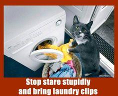 #funnypics #cats #lolcat #lol #lmfao