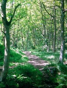 Sherwood Forest - omg remember getting lost,and finding the wrong sherwood forest first