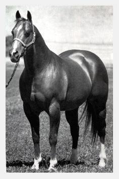 Doc Bar was born in 1956 on Tom Finlay's ranch in Arizona. He was bred to run, but he wasn't successful. Instead, he made an exceptional halter horse. He was also an outstanding cutting horse sire. Doc Bar was 36 when he died in 1992. He was inducted into the AQHA hall of fame in 1993.