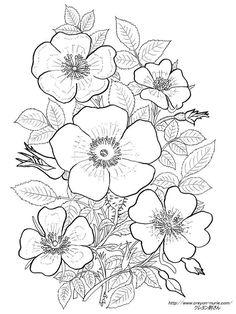 薔薇の植物画の塗り絵の下絵、画像 Spring Coloring Pages, Flower Coloring Pages, Free Coloring Pages, Coloring Books, Flower Art Drawing, Flower Sketches, Floral Drawing, Easy Disney Drawings, Japanese Drawings