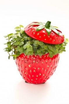Ficus - Curling in a beautiful strawberry flower pot. Strawberry Flower, Strawberry Farm, Strawberry Delight, Strawberry Fields Forever, Strawberry Patch, Strawberry Shortcake, Strawberry Kitchen, Ficus, Strawberry Decorations