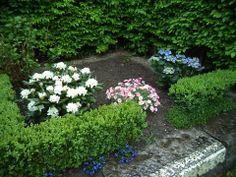 Mon petit jardin botanique continue à se développer: rhododendrons blancs, marguerites roses et hortensias bleus. En bordure, des campanules.