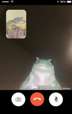 Stupid Funny Memes, Haha Funny, Frog Meme, Frog Pictures, Current Mood Meme, Cute Frogs, Mood Pics, Frog And Toad, Wholesome Memes