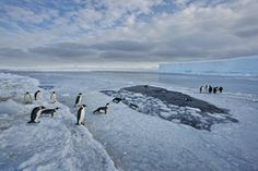 Image ©Paul Nicklen/National Geographic Creative