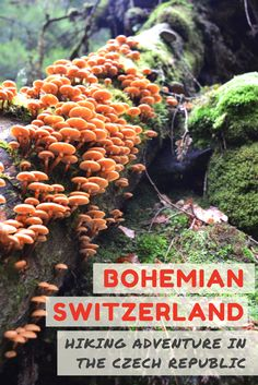 Bohemian Switzerland Czech Republic: Spring is a fantastic time to experience nature in the Czech Republic. Explore the northern region of the country on a day trip from Prague and see all it's springtime delights!