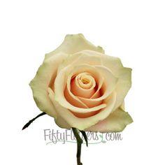 FiftyFlowers.com - Creamy Peach Talea Sweetheart Rose FAVORITE!