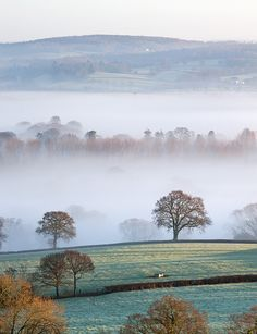 Mist Covered Countryside in the Exe Valley Just North of Exeter, Devon, England. Winter by Adam Burton Metal Prints Metal Print - 30 x 41 cm Devon Uk, Devon England, South Devon, Devon And Cornwall, Devon Life, Landscape Photos, Landscape Art, Landscape Photography, British Countryside