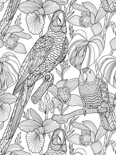 Creative coloring : 100 patterns of plants and animals