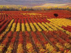 Autumn in La Rioja, Spain