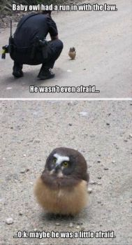 Top 30 Funny Animal Pictures and Jokes Funniest & Most hilarious Animals Pictures and Memes If you love your pets your gonna sure love these Funny pictures, sometimes your pets specially cats to random stupid things that are totally… Cute Animal Memes, Funny Animal Quotes, Animal Jokes, Funny Animal Pictures, Cute Funny Animals, Funny Cute, Baby Pictures, Funny Photos, Super Funny