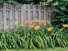 Best Plants - Landscaping Ideas - Country Living Daylily
