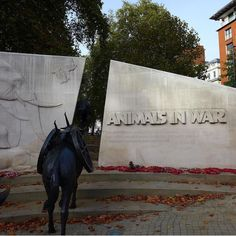 This simple and lovely tribute to #animals in #war was new to me: very appropriate and moving.  #london #architecture #travel #classical #England #GreatBritain #travelblog #travelblogger #military #warmemorials