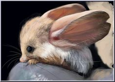 Jerboa....gotta love those big ears....little cutie pie!!!