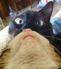 7 best cat beards images on pinterest beards beard style and cute