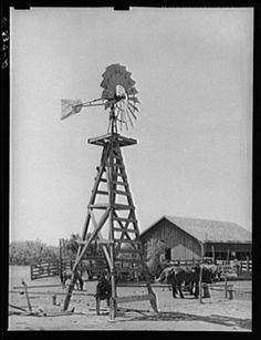 1939 May Windmill, watering trough and barn on SMS Ranch near Spur, Texas My Grandpa Swenson Built & Maintained All The SMS Windmills He Also Built The Troughs & Cattleguards & Some Outbuildings...