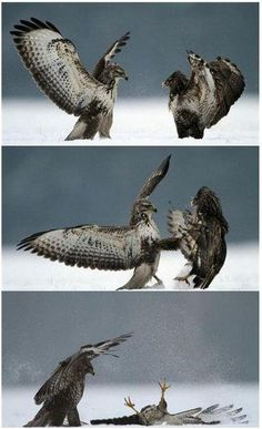 Kung-Fu Bird