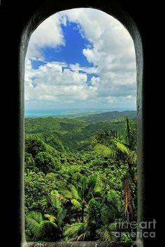 ✯ Yokahu Tower - El Yunque - Puerto Rico