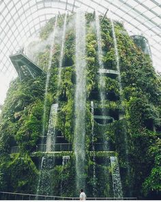 The worlds tallest indoor waterfall (35 metres!) - Cloud Forest in Singapore  Follow @ecoconltd for more inspiring posts!  -  Want to be featured? Use the hashtag #ecoconftme :)  @haarkon_