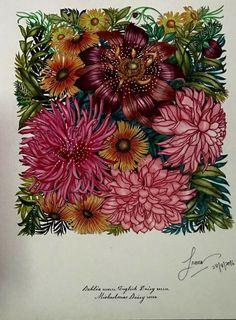 Coloring Along With Isya Mazlan Medium Florindunda By Leila Duly
