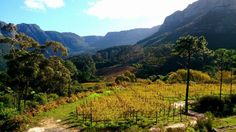Restaurant: La Colombe Cape Town, Winelands, South Africa, Südafrika