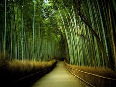 Foresta di bambù...  SUZUKI_Swift_ShortArticles_2012_April_bamboo_02.jpg