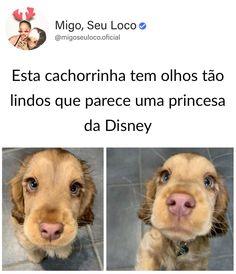 Cute Animal Memes, Funny Animals, Cute Animals, Bad Memes, Funny Memes, Animals And Pets, Baby Animals, Disney Memes, Princesas Disney