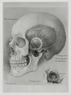 Harvey Cushing medical illustration