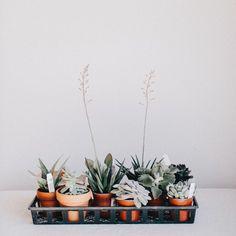 Tiny succulent friends.