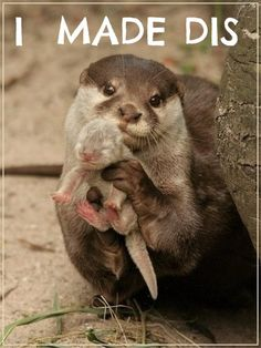 Otterly adorable...