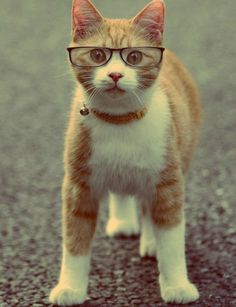Cute cat wearing glasses... click on picture to see more