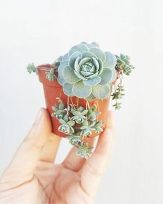 40 Amazing Succulents Garden Decor Ideas Succulents are perfect plants for dry gardens and are easy to root and grow. Once you learn how easy it […] Succulent Gardening, Cacti And Succulents, Planting Succulents, Container Gardening, Planting Flowers, Organic Gardening, Succulent Cuttings, Growing Succulents, Gardening Vegetables