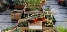 4 Obscure Green Thumb Gardening Tips For Growing Success