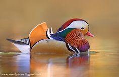 les plus beaux oiseaux du monde - Recherche Google