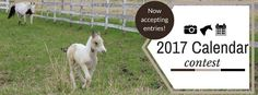 Irongate Equine Clinic is an equine ambulatory veterinary practice serving WI…