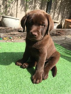 Dog And Puppies Drawings .Dog And Puppies Drawings Super Cute Puppies, Cute Baby Dogs, Cute Dogs And Puppies, I Love Dogs, Doggies, Baby Animals Pictures, Cute Animal Pictures, Cute Little Animals, Cute Funny Animals