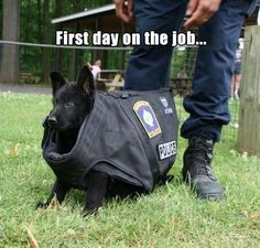 police-puppy funny animal pictures wtf work Weird Training Puppy Puppies Pun Pretty Police pictures lol job hilarious Great funny First Day Of Work First dogs dog Day cute Cops Cop Cool Awesome Animals Animal adorable Cute Funny Animals, Funny Animal Pictures, Funny Cute, Funny Shit, Funny Dogs, Hilarious, Funny Memes, Animal Pics, Funny Animal Humor
