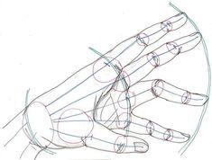 Resultado de imagen para drawing hands proportions