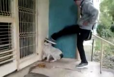 Romanian yob filmed while pouding stray dog repeatedly for fun. Find this person and do the same thing back! Cane Corso, Sphynx, Chinchilla, Otter, Rottweiler, Pitbull, Evil People, Stop Animal Cruelty, Husky
