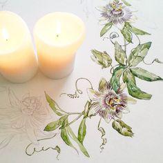 Каникулы. Поплавать, покататься, в гости, порисовать? Порисовать. #workinprocess #wreath #pasiflora #candle #watercolor #aquarelle #drawing #botanical #botanicalillustration #illustration #пасифлора #венок
