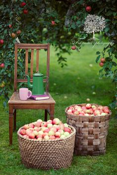 Time for a break, when picking winter apples you need time out for coffee or tea to keep you warm.........