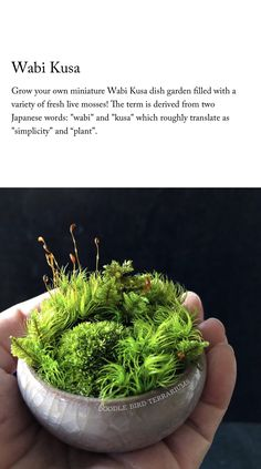 Lots Of Lush Mosses In This Mini Wabi Kusa From Doodle Bird Terrariums Small Indoor Plants, Cool Plants, Air Plants, Cactus Plants, Japanese Garden Plants, Terrarium Plants, Moss Terrarium, Succulent Planters, Hanging Planters