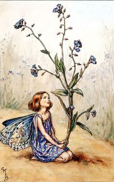 The Song Of The Forget Me Not Fairy by Cicely Mary Barker in Fairy Rings at lair2000